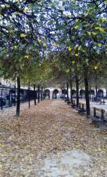 Place des Vosges - Autumn Leaves - Laura Spoonie