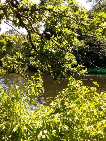 Bird pond in Dulwich Park - Laura Spoonie