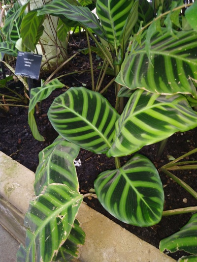Green House Plants - Kew Gardens - Laura Spoonie